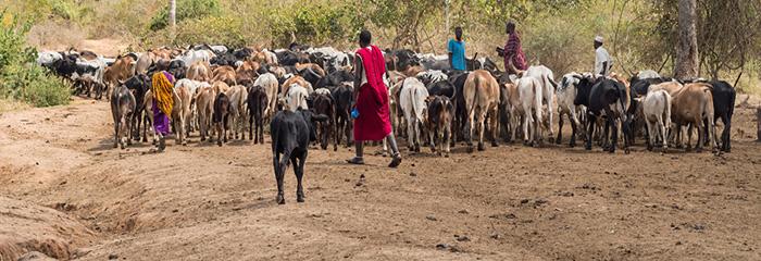 herders_tanzania2